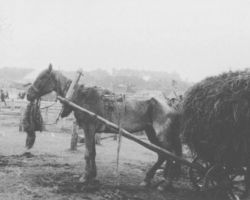 Taken in Kharkiv in 1933, this photograph is from the Innitzer Collection. It shows a starving horse attached to a cart loaded with hay for it to pull. Horses were kept alive for manual labor in the fields and to remove dead bodies in the villages. They were fed and kept by the secret police or other official authorities.