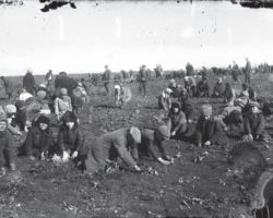 Taken in Donetsk in 1933, this Soviet staged photograph shows young children instructed to dig for any remaining potatoes from the frozen ground using their bare hands. These were collected by officials and taken away. It shows even children were expected to help to find food.